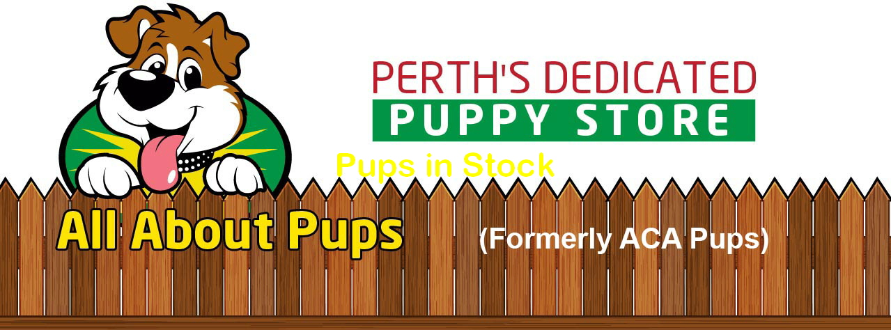 Pups in Stock